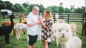 Image of proposal with alpaca