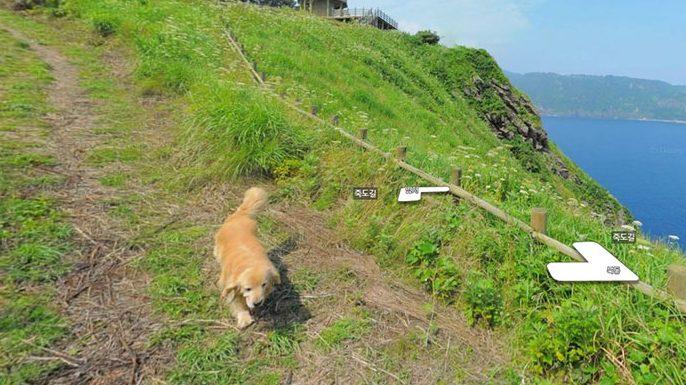 Image of dog photobombing