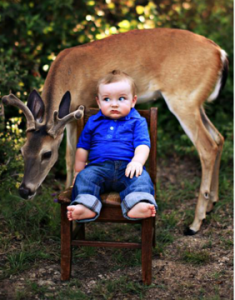 Image of deer photobombing