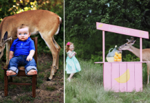 Image of deer photobomb