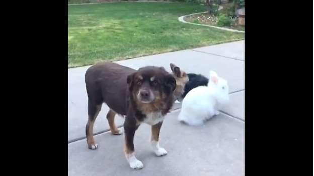 Image of dog photobombs rabbit