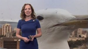 image of 'Giant sea gull' photobombs TV weather report