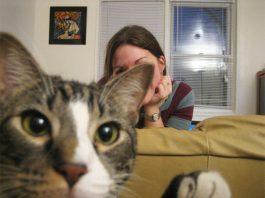 Image of Best Cat Photobombs