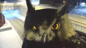 Image of Curious Owl